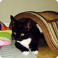 Adopt A Pet :: Clara - Baltimore, MD