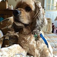 Adopt A Pet :: CHEWIE - Tacoma, WA
