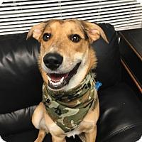 Adopt A Pet :: Benjamin - Oak Ridge, NJ