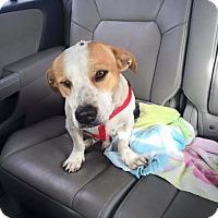 Adopt A Pet :: Princess Leia - Plant City, FL