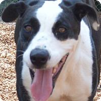 Adopt A Pet :: Gracie - House Springs, MO