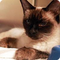 Adopt A Pet :: Crystal - Waco, TX