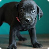 Adopt A Pet :: Dallas - Waldorf, MD