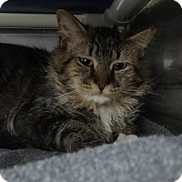 Adopt A Pet :: Kindle - Elyria, OH