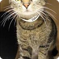 Adopt A Pet :: Tabitha - Birmingham, AL