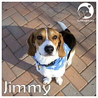 Adopt A Pet :: Jimmy - Pittsburgh, PA