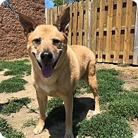 Adopt A Pet :: Purdy - Avon, OH