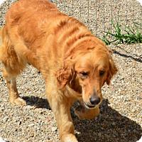 Adopt A Pet :: Alexia - Prole, IA
