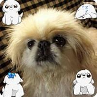 Adopt A Pet :: Waddles - Chantilly, VA