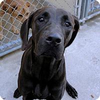 Adopt A Pet :: Zephora *CL* - Independence, MO