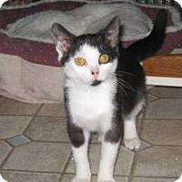 Adopt A Pet :: Pedro - Kirkwood, DE