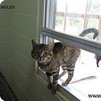 Adopt A Pet :: Bangles - Washington, GA