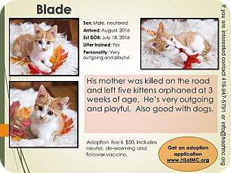Domestic Shorthair Kitten for adoption in Mount Gilead, Ohio - Blade
