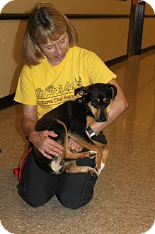 Feist/Miniature Pinscher Mix Dog for adoption in Staunton, Virginia - Vivian