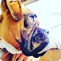 Adopt A Pet :: Meeko - Hurst, TX