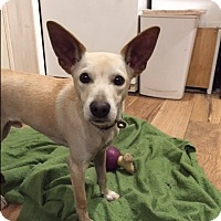 Adopt A Pet :: Kirk - Baltimore, MD