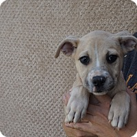 Adopt A Pet :: China - Oviedo, FL
