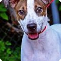 Adopt A Pet :: William - Fort Smith, AR