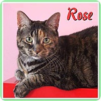 Adopt A Pet :: ROSE - THORNHILL, ON