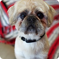Adopt A Pet :: Gideon - Canyon Country, CA