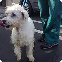 Adopt A Pet :: Otis - Renton, WA