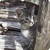 Adopt A Pet :: Boomer - Walnut, IA