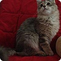 Adopt A Pet :: Dani - Simpsonville, SC