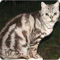 Adopt A Pet :: Rupert - Davis, CA