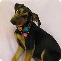 Adopt A Pet :: Luna - Charlemont, MA