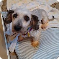Adopt A Pet :: Bell 3302 - Toronto, ON