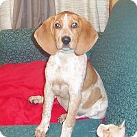 Adopt A Pet :: TASHA - Medford, WI