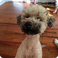 Adopt A Pet :: Piper Morgan - Spartanburg, SC