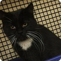 Adopt A Pet :: Mopsy - Covington, KY