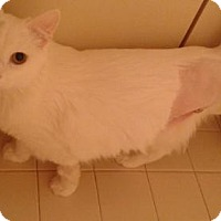 Adopt A Pet :: Fiona - West Palm Beach, FL