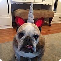 Adopt A Pet :: Gwenie - Santa Ana, CA