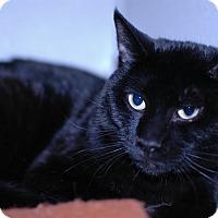 Adopt A Pet :: Felix - Buffalo, WY