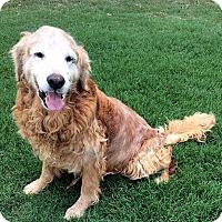 Adopt A Pet :: Albert - BIRMINGHAM, AL
