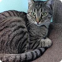 Adopt A Pet :: Ace - Fairfax, VA