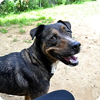 Rottweiler Mix Dog for adoption in Broadway, New Jersey - Sara