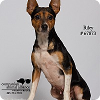 Adopt A Pet :: Riley  (Foster) - Baton Rouge, LA
