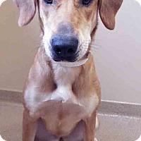 Adopt A Pet :: Jenny - Oswego, IL