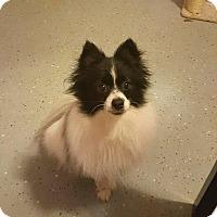 Adopt A Pet :: Oreo - Hazlet, NJ