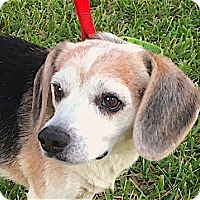 Adopt A Pet :: Tawny - Houston, TX
