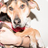 Shepherd (Unknown Type) Mix Dog for adoption in Pompton Lakes, New Jersey - Cricket