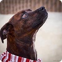 Adopt A Pet :: Zelda - Lincolnton, NC