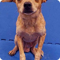 Adopt A Pet :: Curly - Channahon, IL