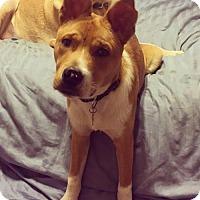 Adopt A Pet :: Efrain - Houston, TX