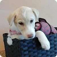 Adopt A Pet :: Flake - Fayetteville, GA