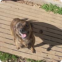 Adopt A Pet :: Lefty - Buchanan Dam, TX