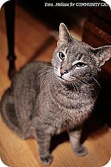 Domestic Shorthair Cat for adoption in Whitewater, Wisconsin - Mamma Kitty